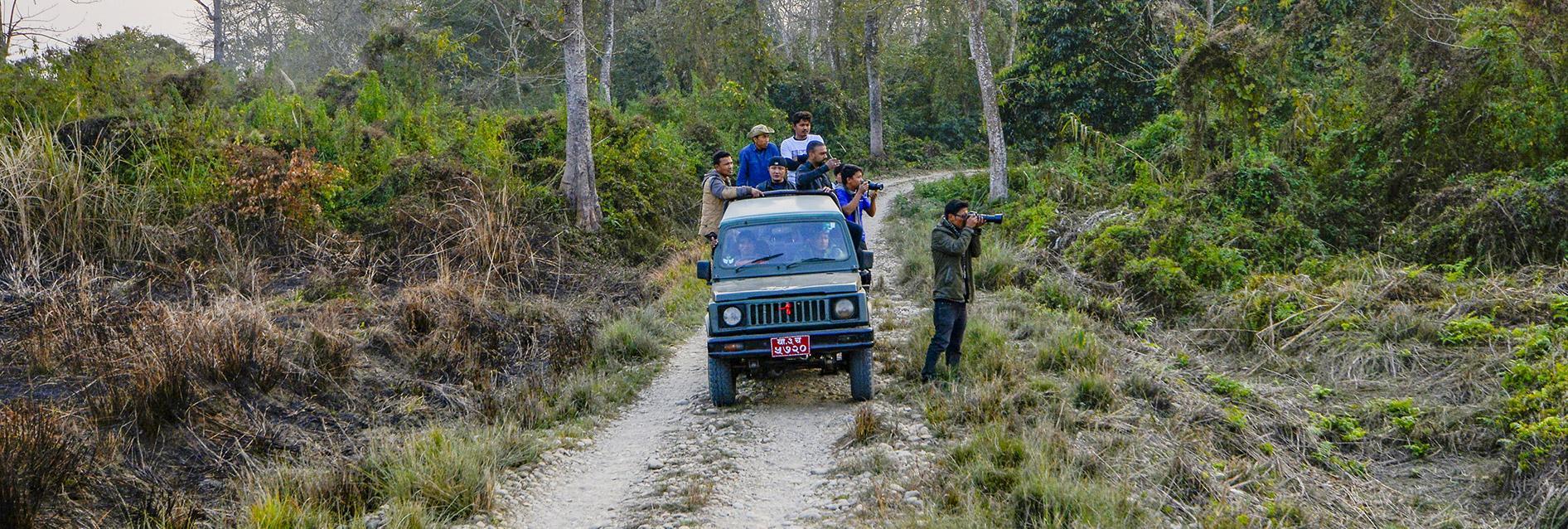 jungle safarir